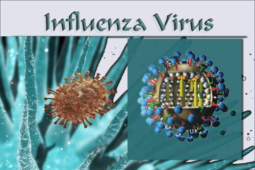 Flu Season - Influenza